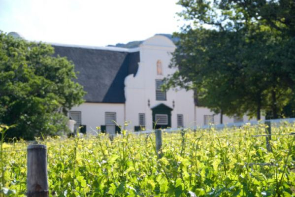 Vineyard, Cape Wine Route